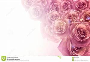 Light Pink Roses In Soft Color And Blur Style For ...