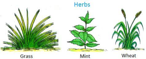 plants   big small plants shrubs herbs
