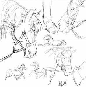 Horse sketches by nightspiritwing on DeviantArt