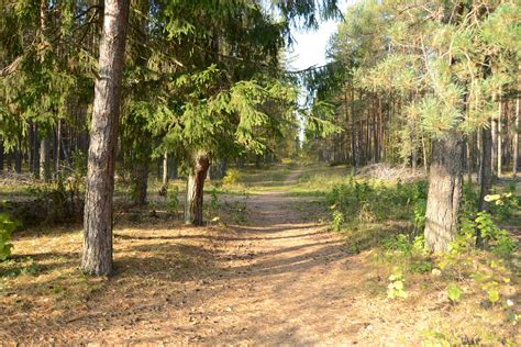 nature, Pathway, Forest Wallpapers HD / Desktop and Mobile ...