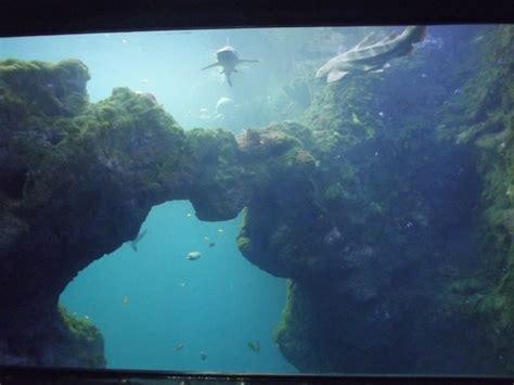 visite de l aquarium de lyon