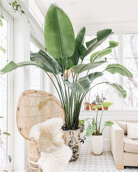 outdoor potted plants sun woven chair and potted plants in indoor outdoor room sfgirlbybay in my home pinterest