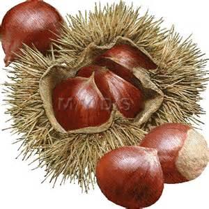 Chestnut Tree Clip Art