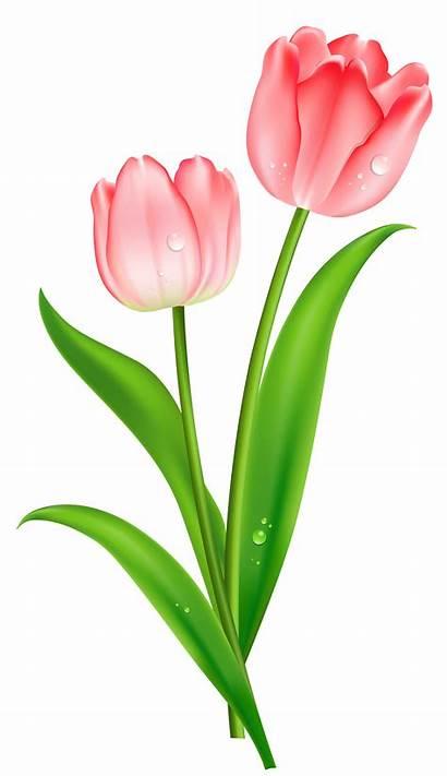 Clipart Clip Pink Tulip Tulips Flower Bouquet
