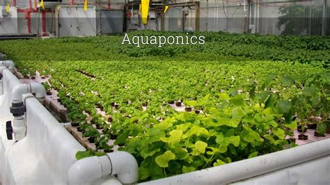 How To Build An Aquaponics System From Scratch (2018 Update