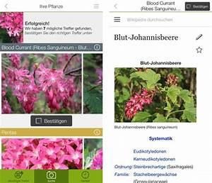 Blumen Erkennen App : funktioniert gut pflanzen und schmetterlinge per app erkennen iphone ~ Eleganceandgraceweddings.com Haus und Dekorationen