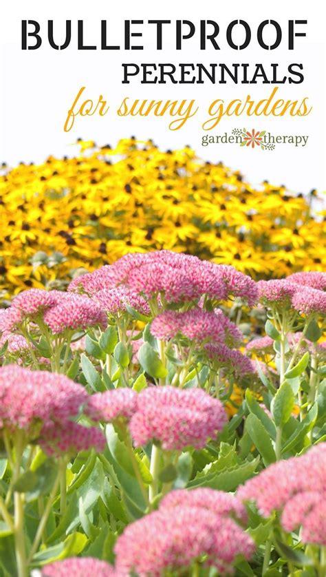 perennial shrubs sun bulletproof perennials for a sunny garden gardens sun and bullets