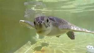 Cute Baby Sea Turtles trying to eat my GoPro - YouTube