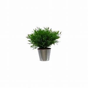 Cache Pot Plante : bambou d 39 int rieur cache pot zinc plantes et jardins ~ Teatrodelosmanantiales.com Idées de Décoration