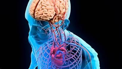 Anatomy Physiology Human General