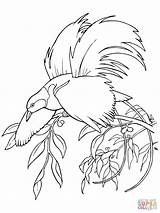 Bird Coloring Paradise Pages Greater Quetzal Printable Para Special Supercoloring Colorings sketch template