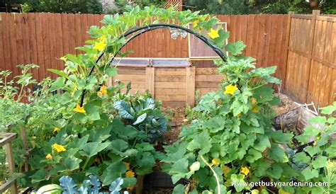 small vegetable garden layout ideas  garden inspirations