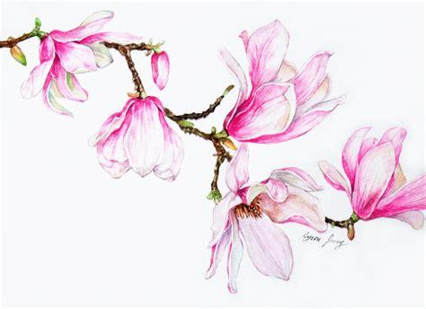 branch  magnolia original watercolor painting pink