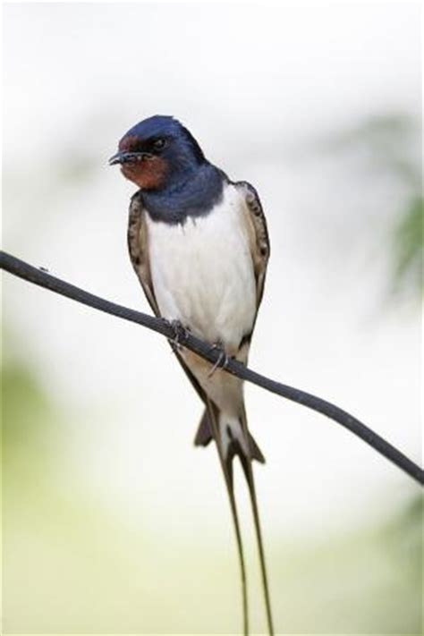 what do barn swallows eat what do birds really eat you won t believe you didn t