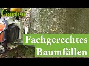 Baum Fällen Anleitung : gartentipp b ume richtig f llen youtube ~ Yasmunasinghe.com Haus und Dekorationen