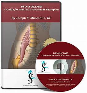 Psoas Major  A Guide For Manual And Movement Therapists