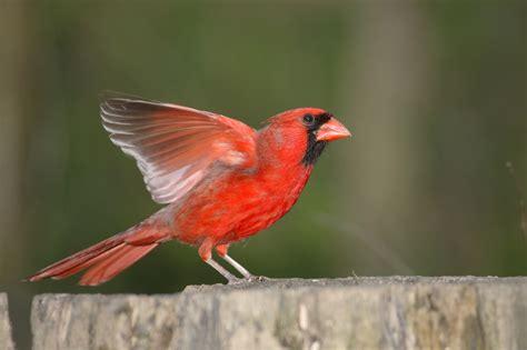 sports teams bird nicknames duncraft