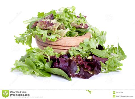 spring mix salad stock photo image  isolated healthy