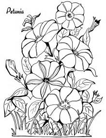coloring page petunias the graphics