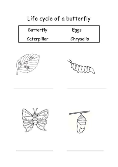 cycle of a butterfly by sophiawg teaching resources 912 | image?width=500&height=500&version=1519313197374