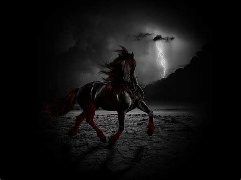 Black Horse Hd Backgrounds