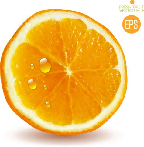 orange slice  vector    vector