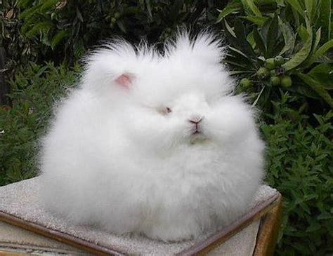 angora rabbit stitchcraft freebie the angora sweater zilredloh