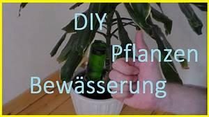 Pflanzen Bewässern Urlaub : bew sserungssystem f r pflanzen selber bauen pflanzen im urlaub gie en bew ssern youtube ~ Watch28wear.com Haus und Dekorationen
