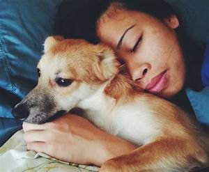 Humans love dogs more than other people: Your suspicions ...