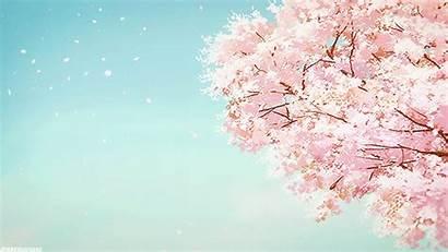 Cherry Anime Blossom Blossoms Scenery 1k Hibike