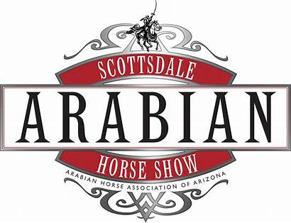 Horse Arabian Scottsdale Polo Derby Horses Admin