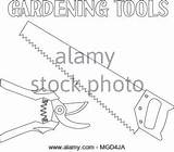 Coloring Alamy Tree Summer Adults Trimming Secateur Line sketch template