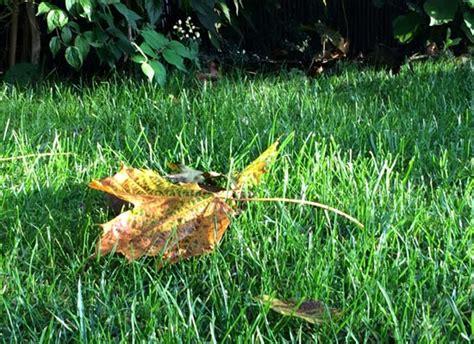 Garten Im Herbst Was Tun by Garten Arbeit Im Herbst Was Jetzt Zu Tun Ist