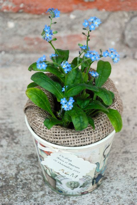 flower pot gift favor growing gift favors plant