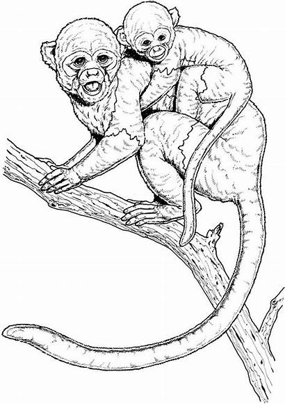 Coloring Monkey Realistic Pages Template Spider Drawing