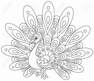 Peacock Drawing Outline | www.imgkid.com - The Image Kid ...