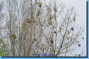 Ameisennest Im Haus : cha am nest ameisen und giftige schlangen im dschungel thailand urlaub waldpark cha am ~ Markanthonyermac.com Haus und Dekorationen