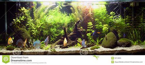 ghiaia per acquario acqua dolce acquario d acqua dolce tropicale immagine stock immagine