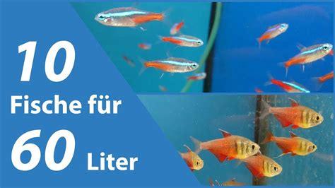 fische kleines aquarium 10 fische f 252 r kleine aquarien 60 liter