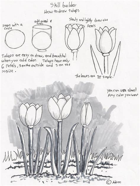 adrons art lesson plans   draw tulips  beginners