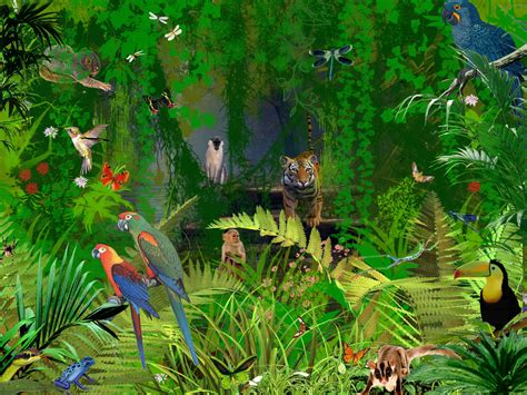 Rainforest Animal Wallpaper - jungle animals picture planet earth j u n g l e s