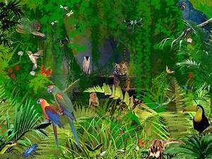 Jungle Animals picture | Planet Earth: J U N G L E S ...