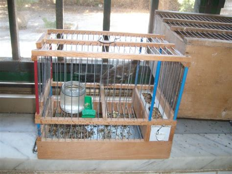 gabbie per cardellini le guardie eco zoofile di napoli sequestrano e liberano