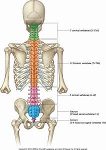 35 Diagram Of Spinal Column
