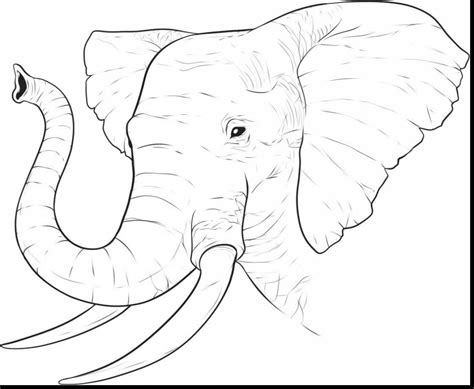 elephants face drawing  getdrawingscom