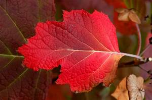 Shrubs for Fall Color: Best Choices for Autumn Yards