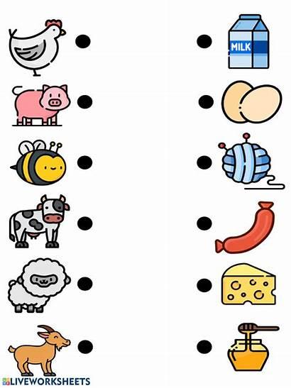 Farm Animals Worksheet Animal Worksheets Preschool Printable