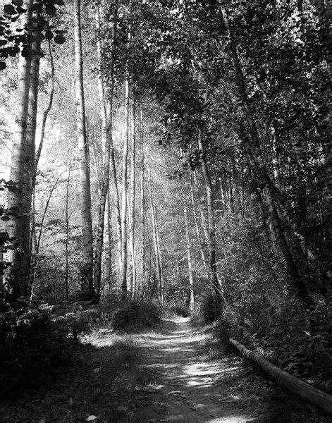 Dark Forest Gothic Photography Black White