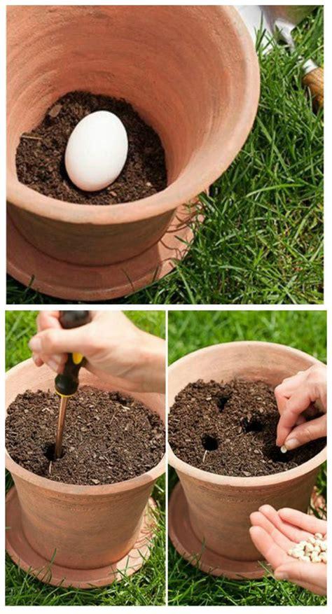 pourquoi faut il planter un œuf cru dans vos pots de fleurs guide astuces