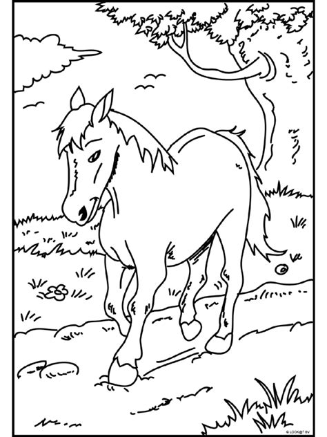 Kleurplaat Paardenhoofden by Kleurplaat Paard In De Weide Kleurplaten Nl